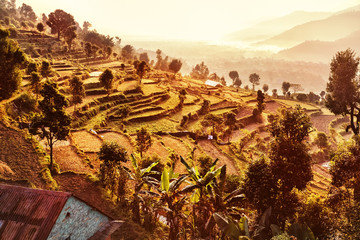 Terraced Landscape, Pokhara, Nepal