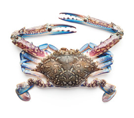 raw blue crab isolated on white background
