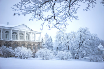 Snow-covered avenue. Winter day. Trees in the hoarfrost. Snow on the trees. Winter in Russia. The city of Pushkin. Tsarskoe Selo.