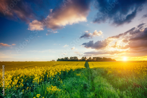 Wall mural Magnificent views of the green grass and canola field glowing by sunlight. Dramatic picture and picturesque scene.