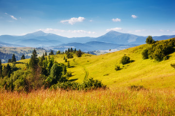 Great view of the alpine valley. Location place Carpathian, Ukraine, Europe.