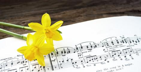 Alte Musiknoten mit Osterglocken, Narcissus pseudonarcissus, Frühling, Ostern