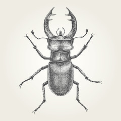 Hand drawn Stag Beetle. Vintage vector illustration