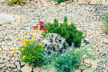 Fragment of landscape design on the street with a small pine stone and yellow flowers on the background of paving stones.