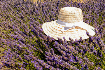 Landscape view of typical hat shot over lavender fields in Provence, France