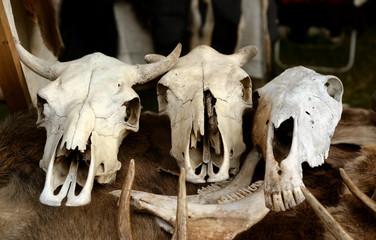Skulls of animals.