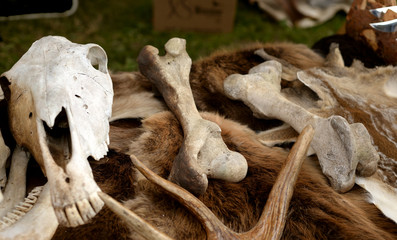Bones and skull of animals.