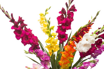 Beautiful bouquet of multicolored gladiolus flowers isolated on white background. Yellow, red, orange, green. Flat lay, top view