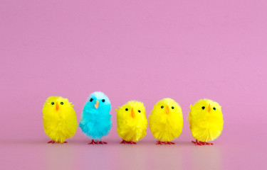 stand out from the crowd-4 yellow toy Easter chicks and one turquoise toy Easter chick in a row on a solid pink background