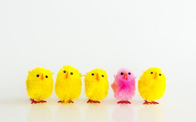Diversity-4 yellow toy Easter chicks and 1 pink toy Easter chick in a row isolated on white