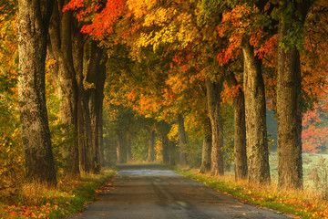 Autumn country road alley / Beautiful old autumnal season trees scenery in north Poland Wall mural