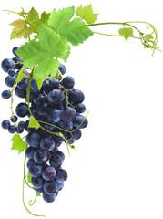 Wall Mural - grappe de raisins rouges et vigne