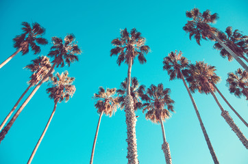 California high palms on the beach, blue sky background
