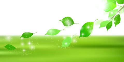 新緑 葉 風景 背景