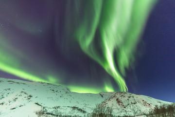 Tanzende Aurora