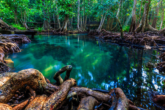 Tha pom mangrove forest, Emerald Pool is unseen pool in mangrove forest at Krabi province, Krabi, Thailand