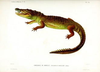 Illustration of a crocodile