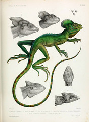 Illustration of a lizard.