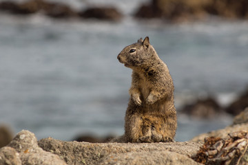 Squirrel Life on the Beach