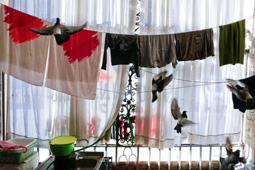 Pigeons fly next to clothes left to dry in the portico of the Basilica of the Santi Apostoli where some families were evicted from an unused building live in Rome