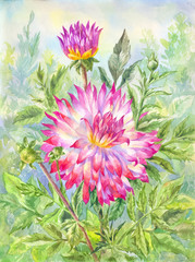 Watercolor dahlia in flowering garden. Summer illustration