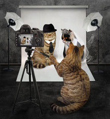The cat takes pictures of the cat's wedding in his photo studio.