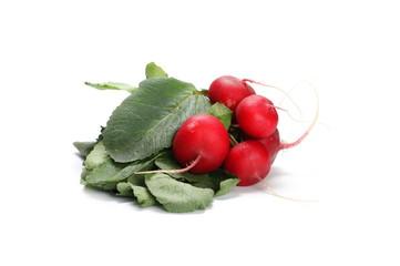 Fresh red radishes with leaves isolated on white background, raphanus raphanistrum, sativus