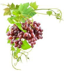 Wall Mural - grappes de raisin et feuilles de vigne
