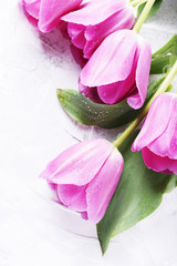 Wall Mural - Amazing pink tulips on the stone background