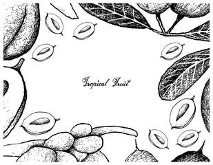 Hand Drawn Frame of Karanda and Double Coconut Fruits