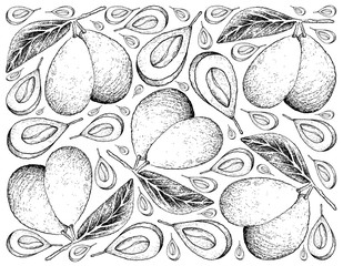 Hand Drawn Background of Fresh Marian Plums