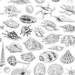 seamless pattern Unique museum collection of sea shells rare endangered species, molluscs Gastropoda Bivalvia Venus comb murex Tridacna squamosa Muricidae black contour on white background. Vector