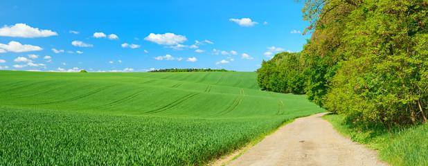 Wall Mural - Kulturlandschaft im Frühling, grünes Feld, Feldweg, blauer Himmel mit Schönwetterwolken