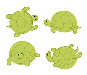 green tortoises