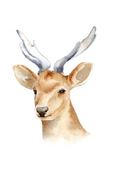 The head of a male deer with horns. Isolated background. Boho template to design posters, wedding invitations, cards.