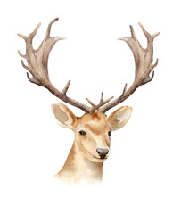 The head of a male deer with horns. Boho template to design posters, wedding invitations, cards.