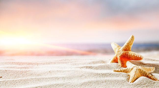 shell on santa and ocean landscape
