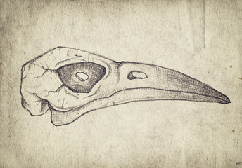 Old vintage paper with hand drawn bird skull