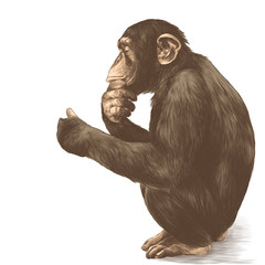 a monkey with a pensive look sitting on his haunches and holds his paw near the chin, sketch vector graphics color picture