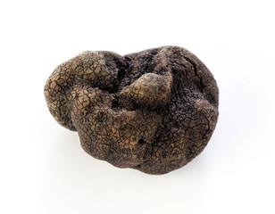 Black truffle Tuber melanosporum