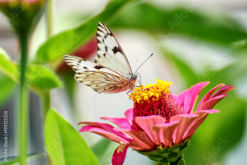 Beautiful Butterfly On A Flower With A Colorful Background In Summer
