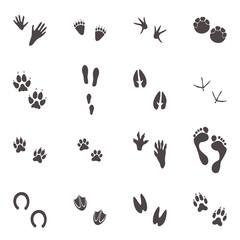 verschiedene Spuren von Tieren