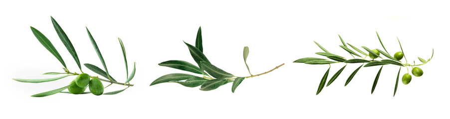 Set of green olive branch photos, isolated on white Wall mural