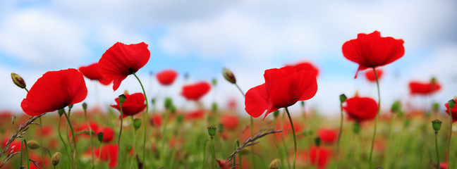 Foto op Aluminium Klaprozen Poppies on sky background.