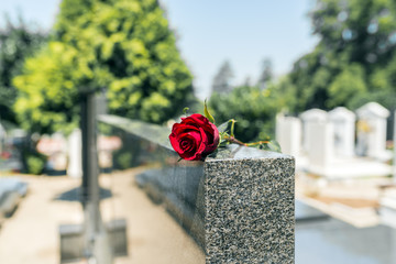 Rose in a cemetery with headstone Fototapete