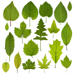Collection of garden green leaves isolated on white background. Leaf set.