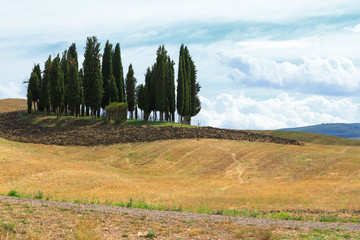 landscape of group of chirstmas tree on hill background with beautiful sky ikn italy