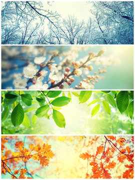 Four seasons. A pictures that shows four different pictures representing the four seasons: Spring, summer, autumn and winter