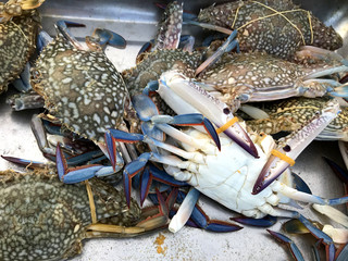 Fresh color crabs at the market in Thailand.