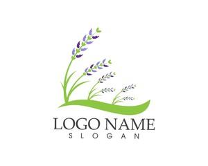 Lavender flower icon sign logo